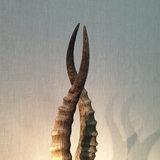Gemsbokhoorns H55_