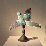Vogel Blauw Open Vleugels_
