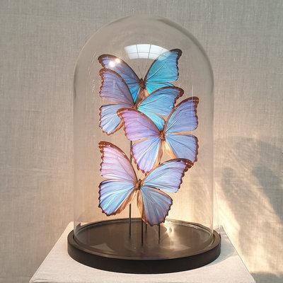 4 Morpho vlinders