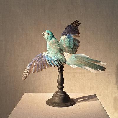 Vogel Blauw Open Vleugels